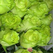Роза Лимбо