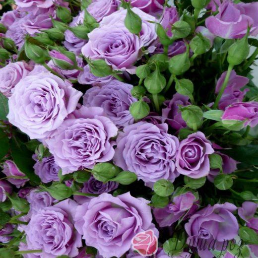 Роза  Сиреневый туман