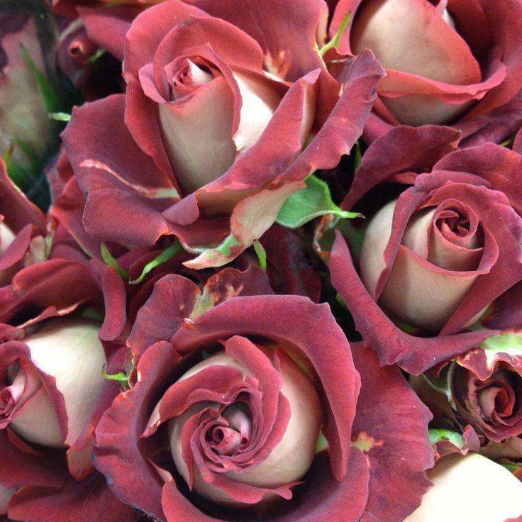 Фотокаталог розовых роз