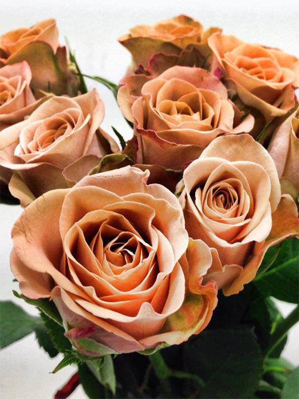 Роза Капучино
