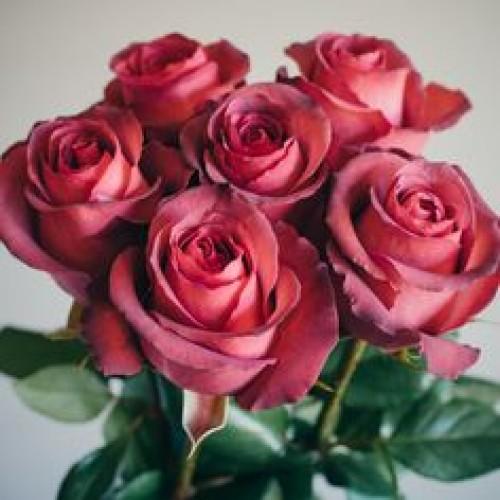 Роза Матильда