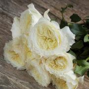 Роза Пейшенс